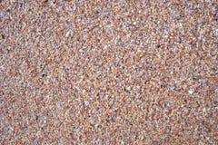 seashells de plage Images libres de droits