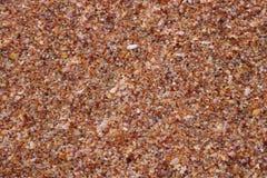 seashells de plage images stock