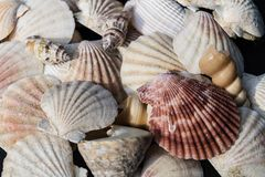 seashells de plage photos stock