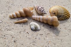 seashells de plage image stock
