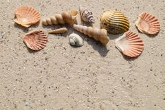 seashells de plage photographie stock