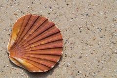 seashells de plage image libre de droits