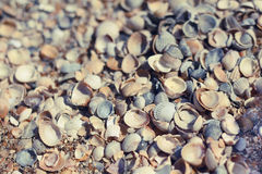seashells de plage Photographie stock libre de droits