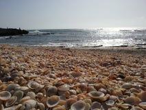 seashells de plage photographie stock libre de droits