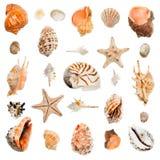seashells de ramassage images libres de droits
