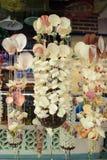 Seashells de suspensão fotos de stock