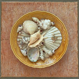Seashells in decorated dish Stock Photography