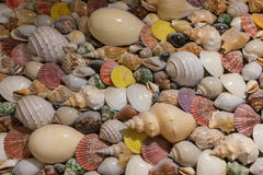 Seashells decoration on the wall in hotel. Various seashells decoration on the wall in hotel Royalty Free Stock Images