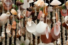 Seashells decorations Stock Images