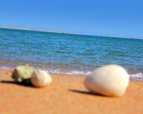 Seashells Defocused sur la plage images libres de droits