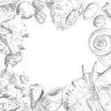 seashells del blocco per grafici della priorità bassa buoni royalty illustrazione gratis