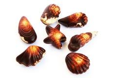 Seashells del chocolate imagen de archivo