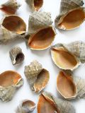 Seashells diferentes Foto de Stock Royalty Free