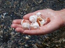 Seashells a disposición Foto de archivo
