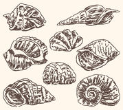 Seashells doodles Royalty Free Stock Photos