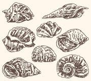 Seashells doodles. Vector sketces of the various sea shells Royalty Free Stock Photos