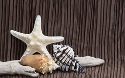 Seashells driftwood on brown background Stock Photos
