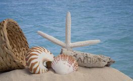 Seashells driftwood on brown background Stock Image