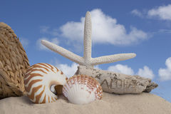 Seashells driftwood on brown background Royalty Free Stock Photos