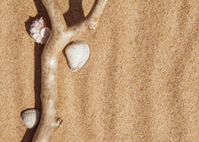 Seashells and dry branch on the sand Royalty Free Stock Photography