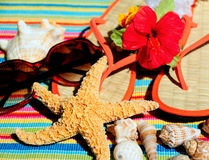 Seashells durch Beach Items Lizenzfreies Stockfoto