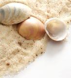 Seashells e areia Fotografia de Stock