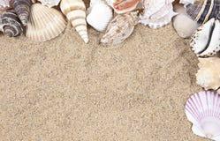 Seashells e beira da areia imagem de stock royalty free