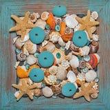 Seashells e corallo Fotografie Stock Libere da Diritti