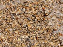 Seashells e espuma na praia Fotografia de Stock