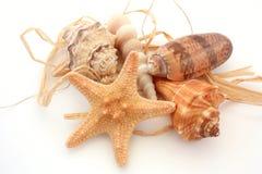 Seashells e starfish Imagens de Stock Royalty Free