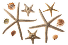 Seashells e starfish Imagem de Stock Royalty Free