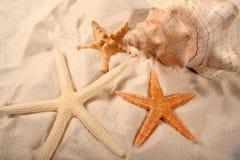 Seashells e Starfish imagem de stock royalty free