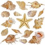 Seashells e stelle marine Immagini Stock Libere da Diritti