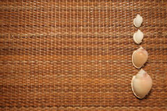 Seashells in einer Reihe lizenzfreie stockfotografie