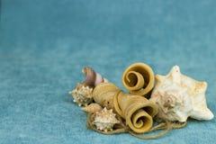 Seashells em um fundo azul fotografia de stock