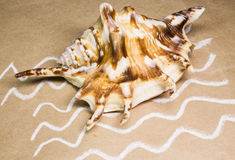 Seashells em um papel handmade Fotos de Stock