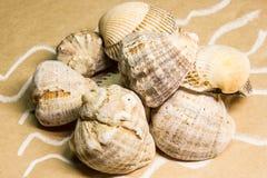 Seashells em um papel handmade Fotografia de Stock Royalty Free