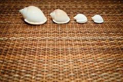 Seashells em uma beira da fileira Foto de Stock Royalty Free