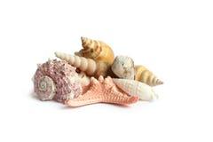 Seashells en el fondo blanco Imágenes de archivo libres de regalías