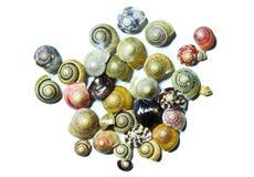 Seashells en el fondo blanco. Foto de archivo