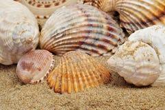 Seashells en la arena imágenes de archivo libres de regalías