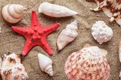 Seashells en la arena foto de archivo libre de regalías