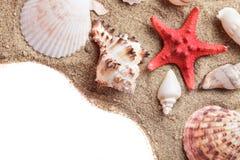 Seashells en la arena imagen de archivo libre de regalías