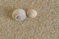 Seashells en la arena Fotos de archivo libres de regalías