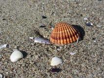 Seashells en la arena Fondo de la playa del verano Visión superior imagenes de archivo
