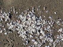 Seashells en la arena Fondo de la playa del verano Visión superior foto de archivo