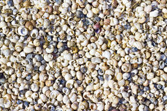 Seashells en la orilla imagen de archivo libre de regalías