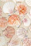 Seashells en la playa fotografía de archivo