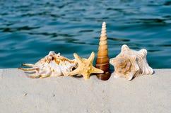 Seashells en la playa Imágenes de archivo libres de regalías