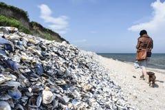 Seashells en la playa Fotografía de archivo libre de regalías